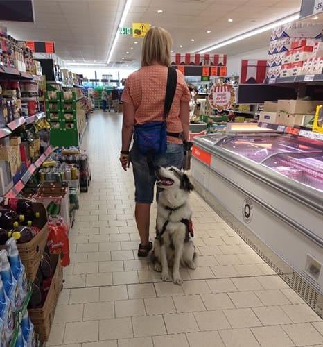 Assistenzhund Matze im Supermarkt
