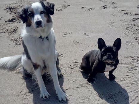 Assistenzhund Matze mit Hundefreund