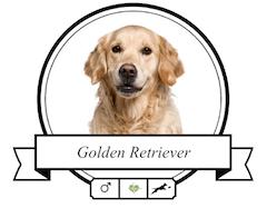 Golden Retriever Futter für rassespezifische Krankheiten