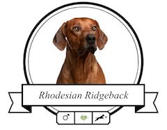 Rhodesian Ridgeback Futter für rassespezifische Krankheiten