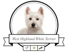 West Highland White Terrier Futter für rassespezifische Krankheiten