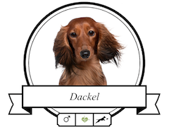 Dackel (Teckel/Dachshund) Futter für rassespezifische Krankheiten