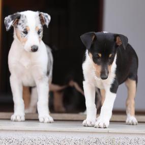 Calcium und Co in der Ernährung von Hunden