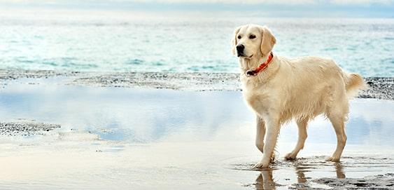 Hund am See abkühlen