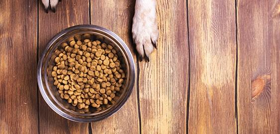 Magendrehung beim Hund: Mehrere kleine Mahlzeiten füttern