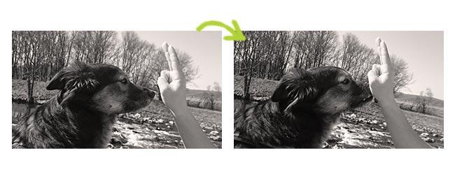 Anleitung Hundetrick