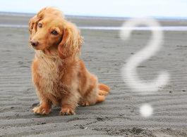 Unsere Tierärzte beantworten die Fragen der Hundehalter