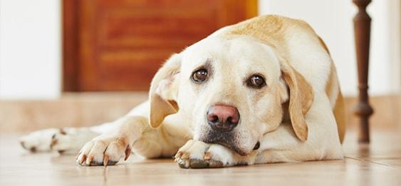 Hund ist krank - ab wann zum Tieraerzt?