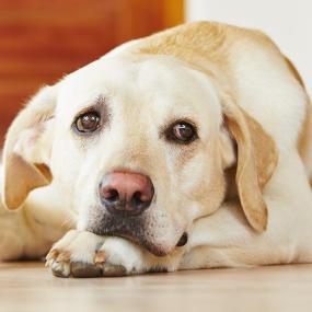 Gelenkbeschwerden beim Hund vorbeugen