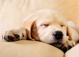 Der richtige Hundeschlafplatz