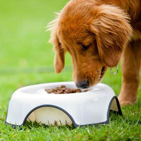 Hund hypoallergen ernähren