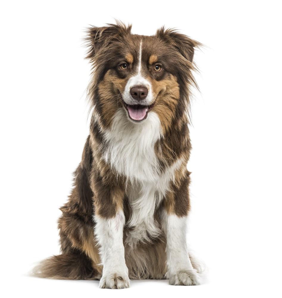 Ernährungsberatung für Hunde im futalis Newsletter