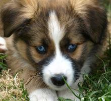 Fieber bei Hunden