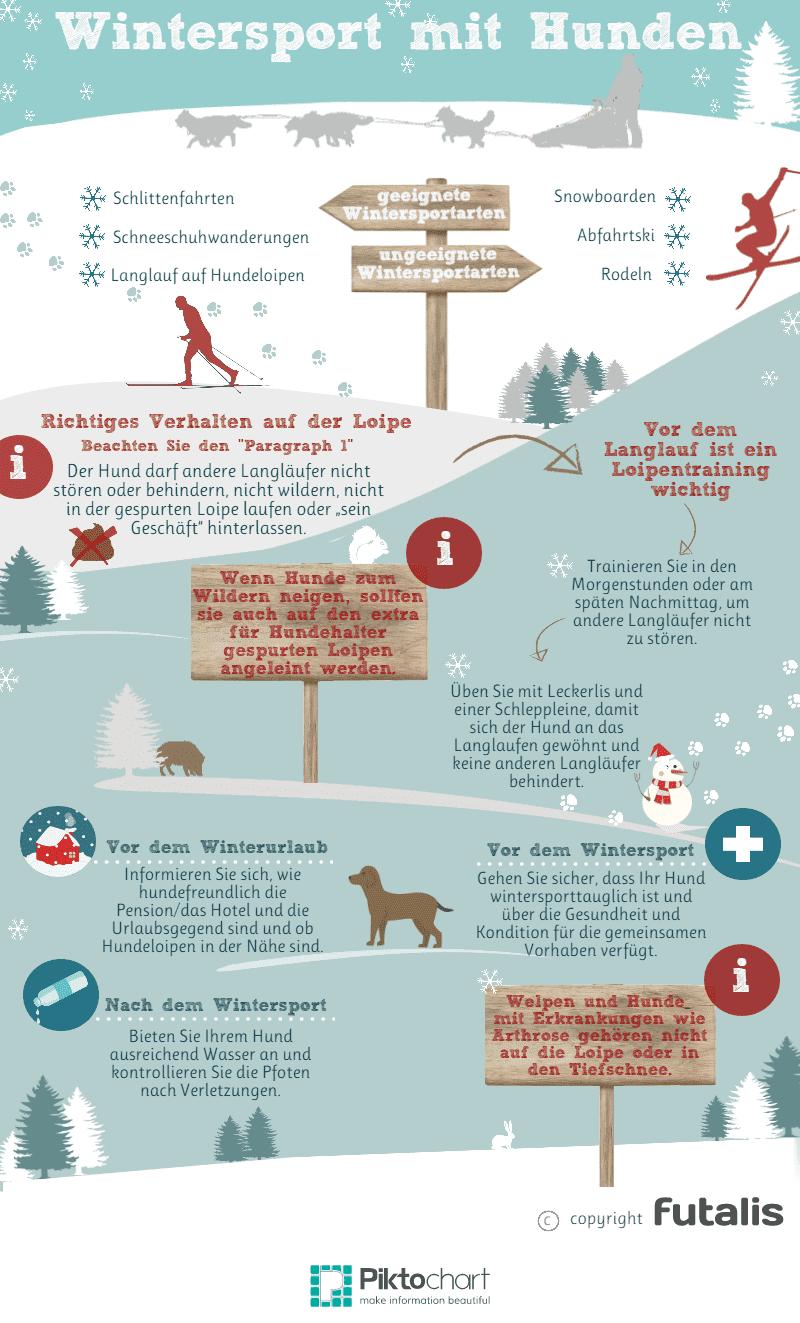 Wintersport mit Hund