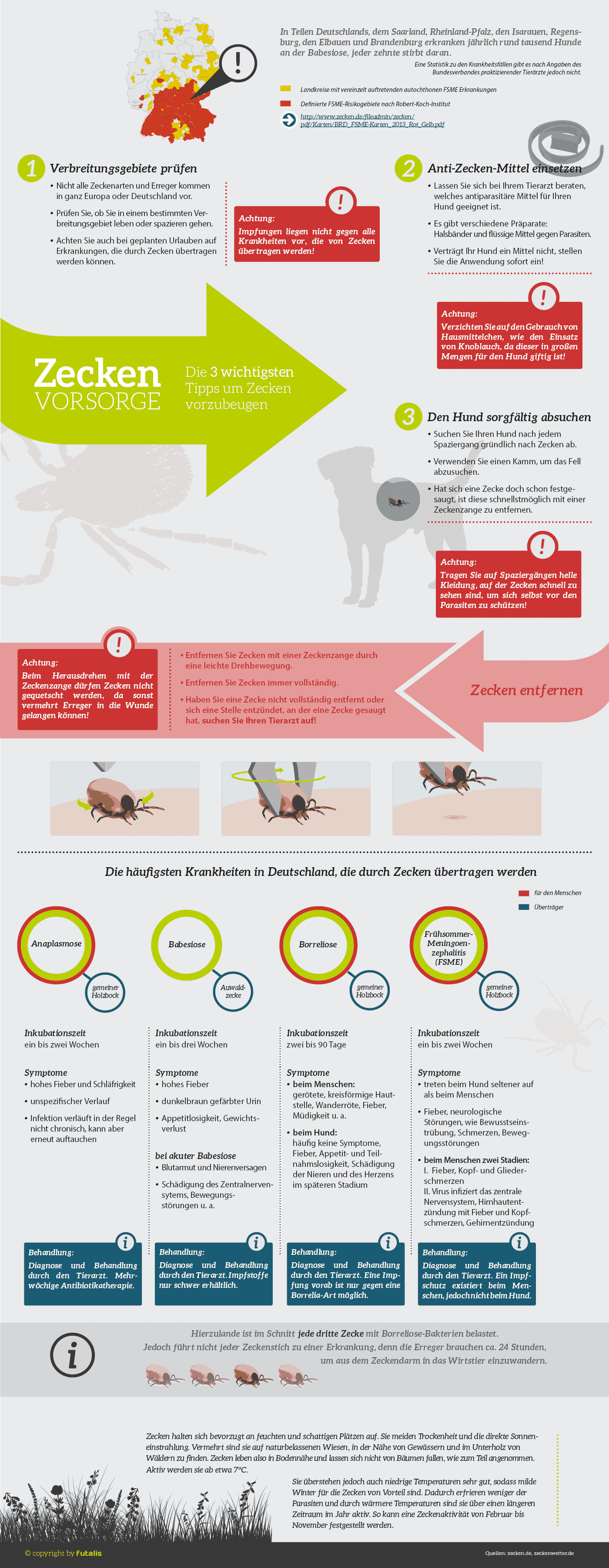 Infografik: Zecken bei Hunden - Erkrankungen und Behandlungstipps