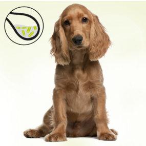 Blasenentzündung Hund