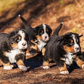 Herbst Hunde