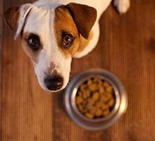 Hund und Futternapf | Stiftung Warentest testet Futter