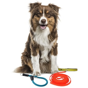 Hund mit Hundezubehör