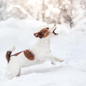Hund und Wintersport
