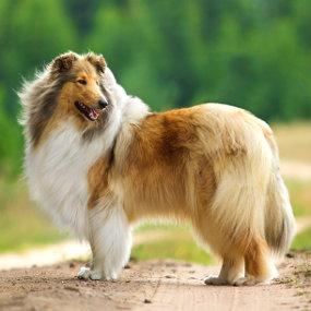 Die Pflege des Hundes
