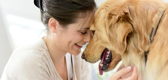 Fürsorge: Hund mit Mensch