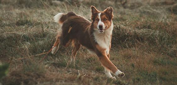 Ein aktiver Hund
