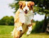 Informationen rund um Hundehaltung