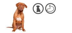 Bordeaux Dogge Welpe mit Verdauungsproblemen