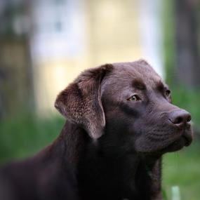 Labrador Welpen 5 Fakten Erziehung Entwicklung Futalis De