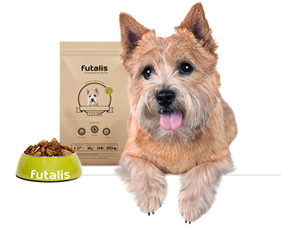 Norwich Terrier Futter
