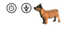 Norwich Terrier Seniorhündin mit Gelenkbeschwerden