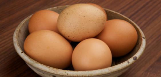 Eier im Hundefutter