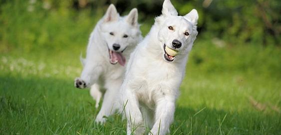 Für das Antijagdtraining: Kontrolliertes Ballspiel mit Hund