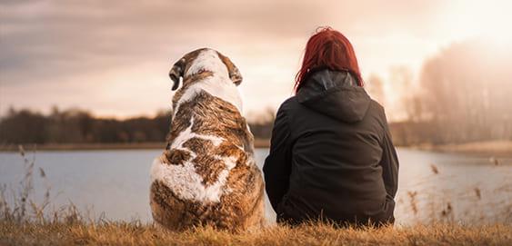 Bernhardiner - eine große Hunderasse