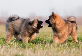 Sozialisierungsphase beim Hund