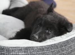 Welpe im Hundebett