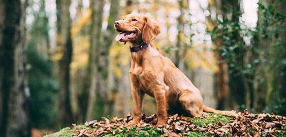 Junghund im Wald