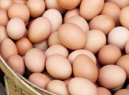 Rohstoffe im Hundefutter - Eier