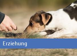 Erzieung Hund Welpenfibel