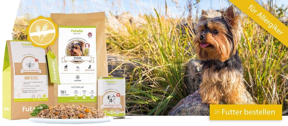 Hund mit Allergiker Futter