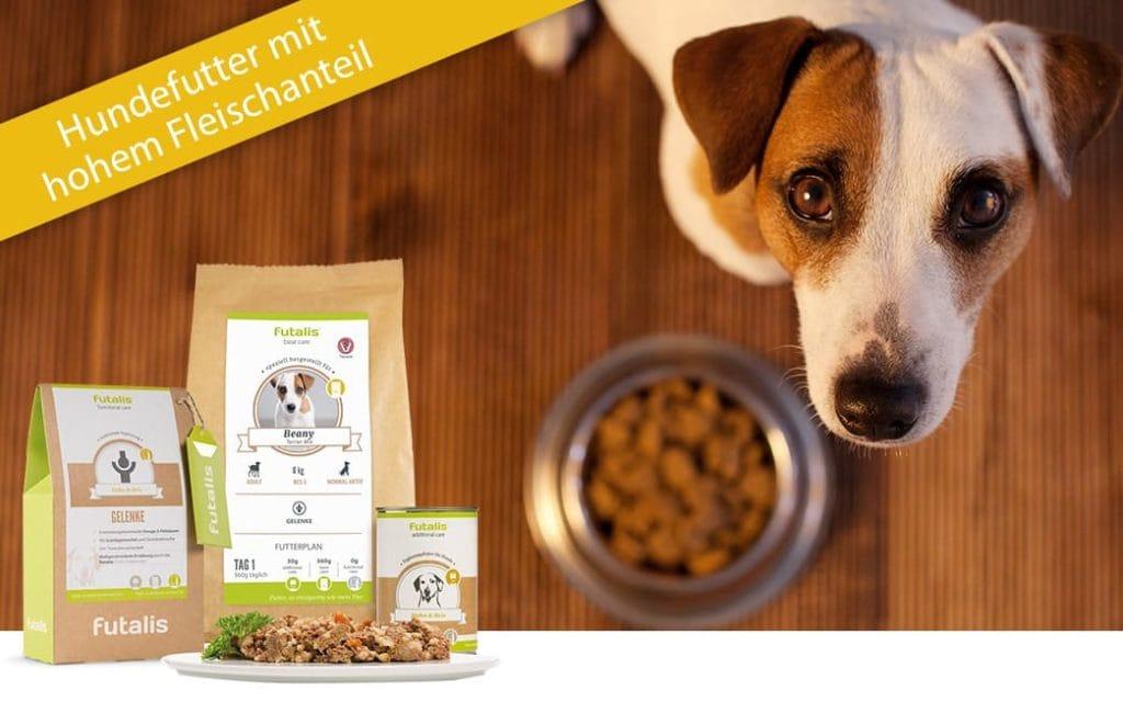 Hund mit fleischhaltigem Futter