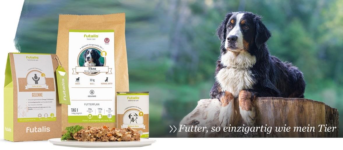 Antioxidantien im Hundefutter