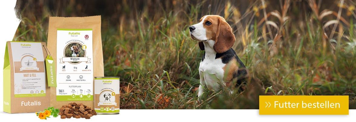 Rassefutter für Beagle