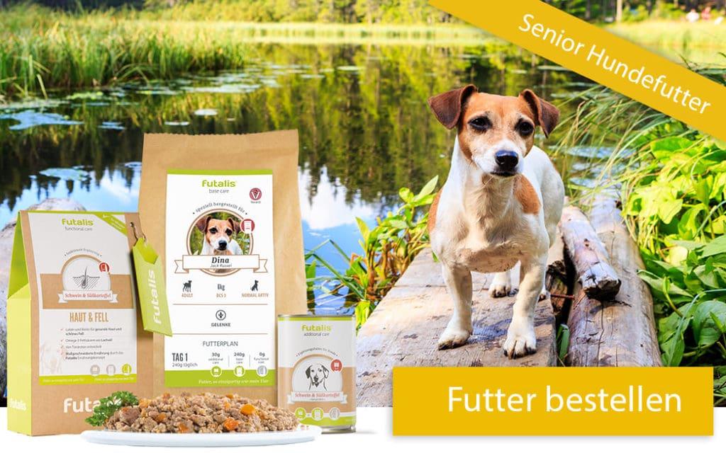 Hund mit Futter ohne Getreide