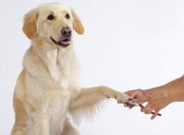 Hund beim Krallenchneiden