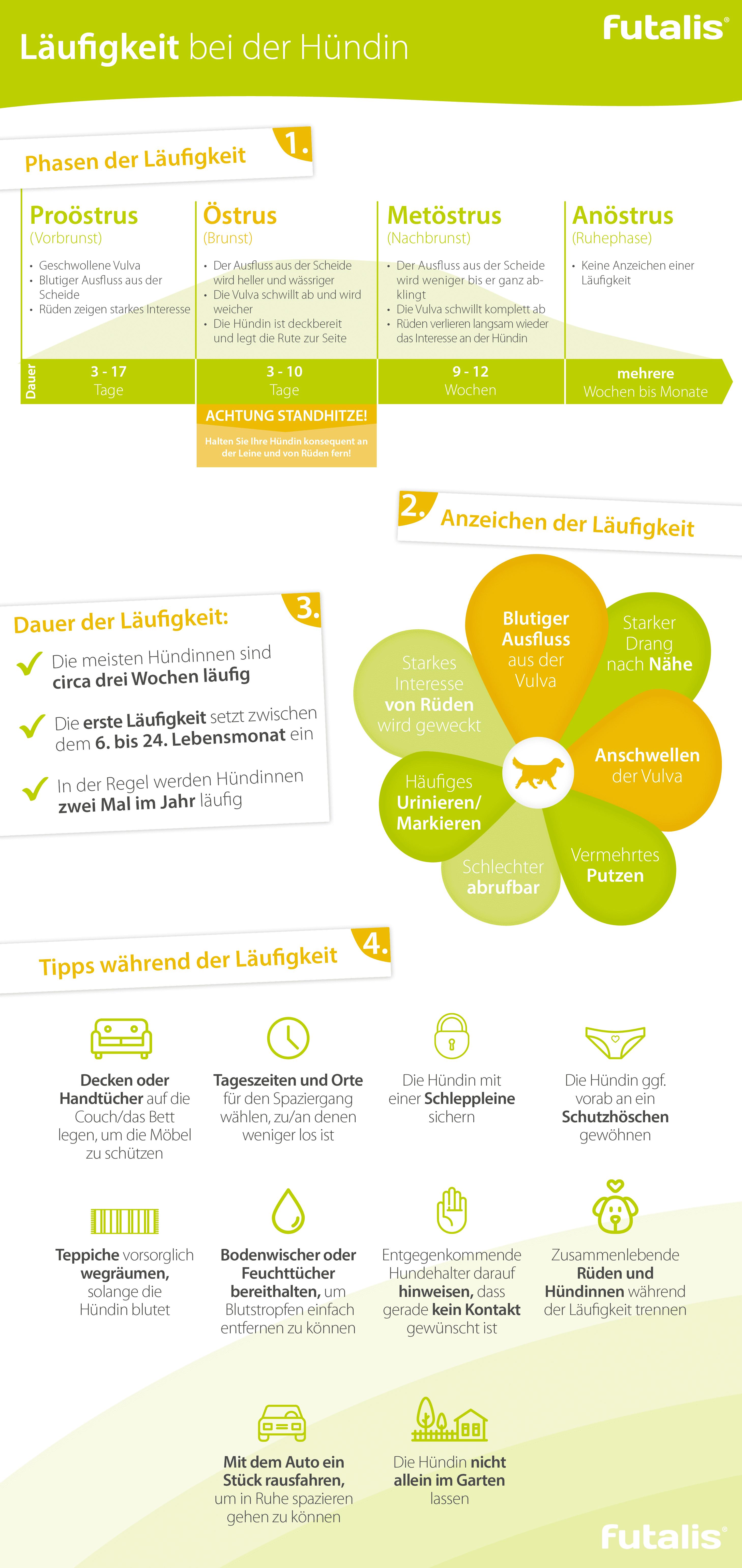 Infografik Läufigkeit