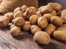 Rohstoffe im Hundefutter - Kartoffeln