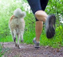 Joggen mit Hunden