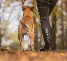 Hund und Mensch unterwegs
